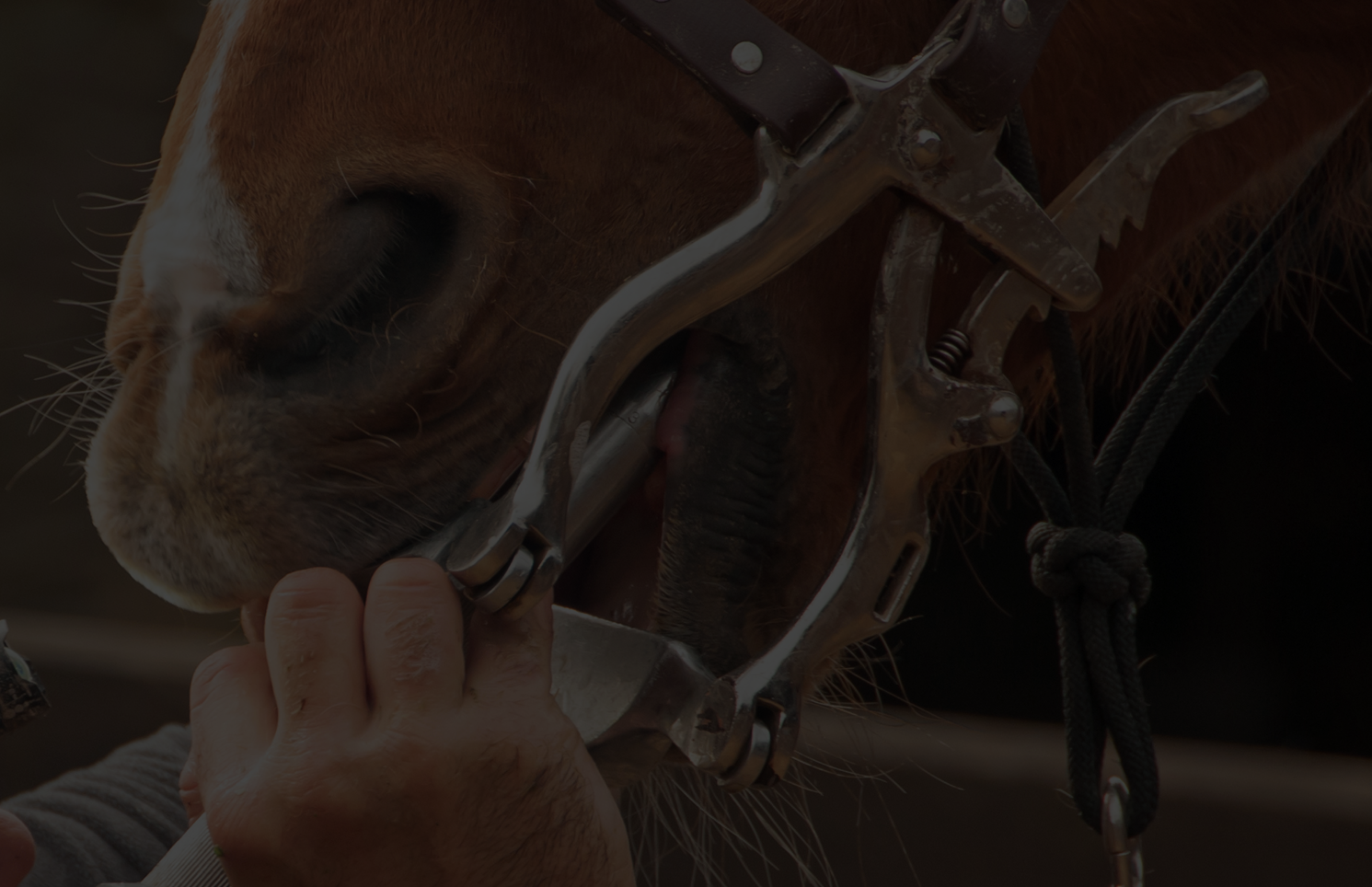 Equine Dentist Website Template
